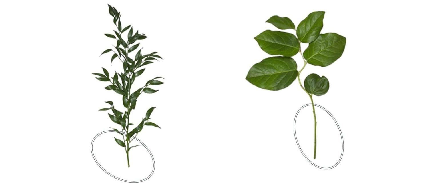 Modern Minimalist Wedding - greenery ideas