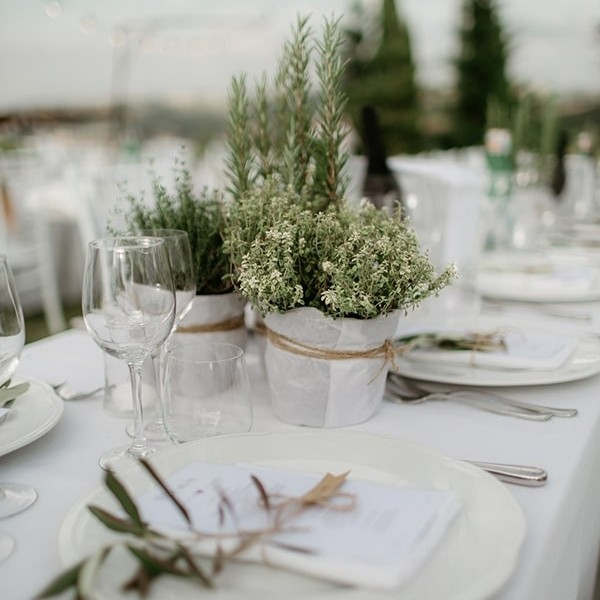 Easy & Affordable DIY Wedding Centerpiece- potted plants