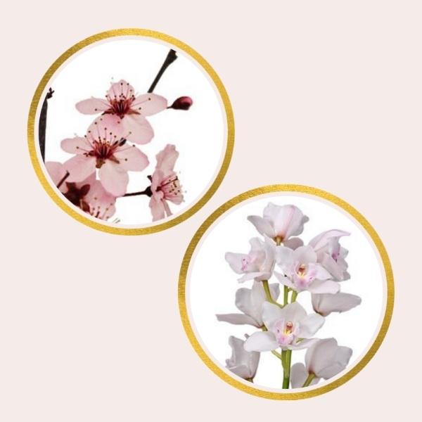 cherry blossom and cymbidium orchids