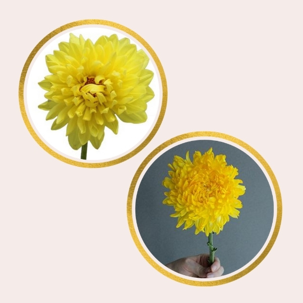 Affordable Alternatives For Pricy Flowers - chrysanthemums and dahlias