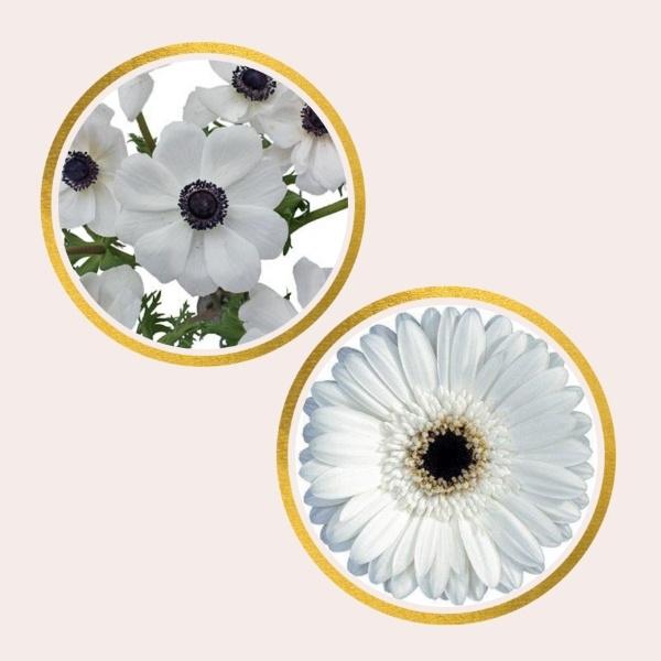 gerbera daisies and anemones
